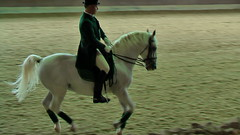 "Lipizzaner Dressage • <a style=""font-size:0.8em;"" href=""http://www.flickr.com/photos/64637277@N07/5890905980/"" target=""_blank"">View on Flickr</a>"