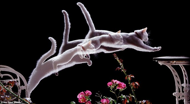 Amazing photos capture split-second movements of animals leaping and flying... in a single frame  2