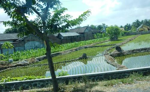 Lombok-Mataram (10)