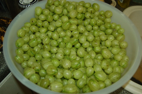 gooseberries Jul 11