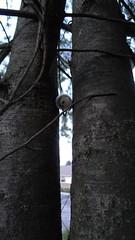 geocache - north bend kroger