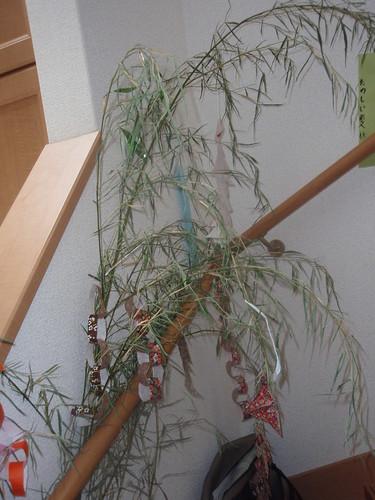 dead tanabata tree