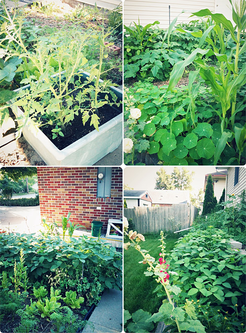 A few shots of our garden