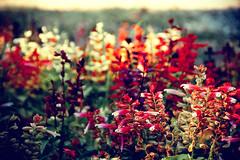 July with Jane (Melissa Maples) Tags: flowers red summer plants turkey nikon asia trkiye antalya nikkor vr afs  18200mm   f3556g d40  18200mmf3556g