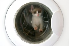 Cats are clean (.chourmo.) Tags: cat washingmachine gatto lavatrice frulo