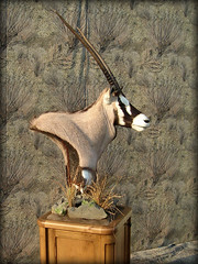 "Africa Taxidermy 1 • <a style=""font-size:0.8em;"" href=""http://www.flickr.com/photos/27376150@N03/5930174973/"" target=""_blank"">View on Flickr</a>"