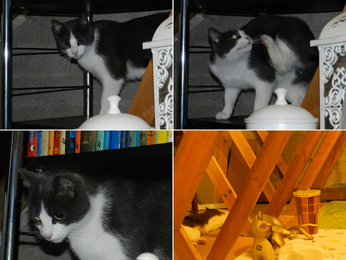 Pushy explores the attic