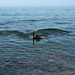 Fazendo snorkel no azul sem fim