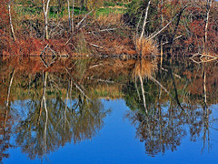 ARBOLES REFLEJADOS EN EL DUERO (titoalfredo) Tags: españa rio azul árboles valladolid douro reflejos penínsulaibérica duero castillayleón unióneuropea villanuevadeduero
