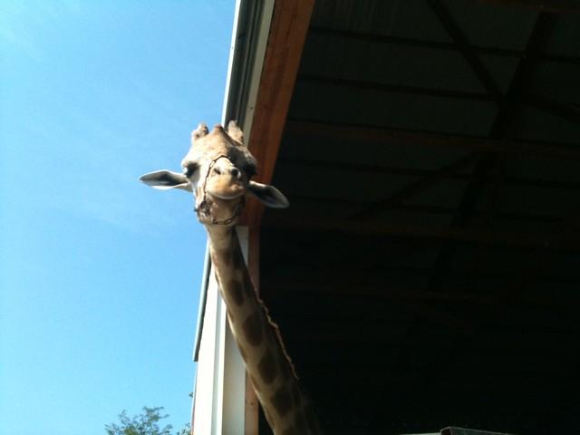 Lazy L Safari Field Trip_7.15.11