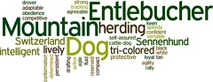 Entlebucher Mountain Dog (Wry Toast Designs) Tags: dog dogs fun design words colorful graphic toast text canine showing wry fci k9 akc purebred entlebuchermountaindog wrytoast