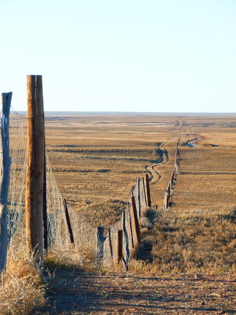 P1080355 Dog Fence