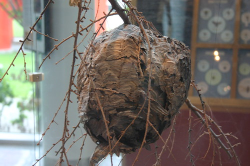 Wasp Nests in the House