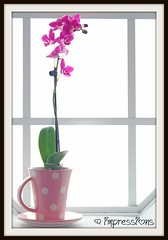 my orchid <3 (AmysBodyDecor {Bailey Brand}) Tags: pink white plant orchid flower cup window kitchen mom day tea mommy polka dotted mothers impressions dots saucer amysbodydecor impressionsbyamy