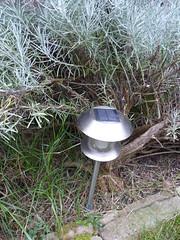 Solar lamp in the border P1550356