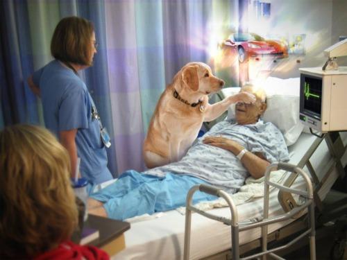 wishgrantingdoggers