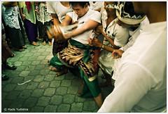 This Keris Can't Hurt Me (Bali Freelance Photographer) Tags: bali work canon eos photo photographer action ceremony culture made tradition trance pur freelance adat budaya balinese fotografer odalan unik upacara yudis ngurek yudistira myudistira kerasukan pengrebongan madeyudistira yudist myudistiraphotography