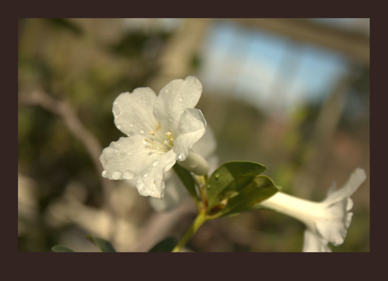 White Flower and Bokeh
