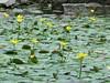tappeto gialloverde