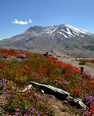 Mt. St. Helens with flowers (ystenes) Tags: usa volcano washington mtsthelens visitorcenter indianpaintbrush castilleja johnstonridge mygearandme mygearandmepremium mygearandmebronze mygearandmesilver mygearandmegold mygearandmeplatinum