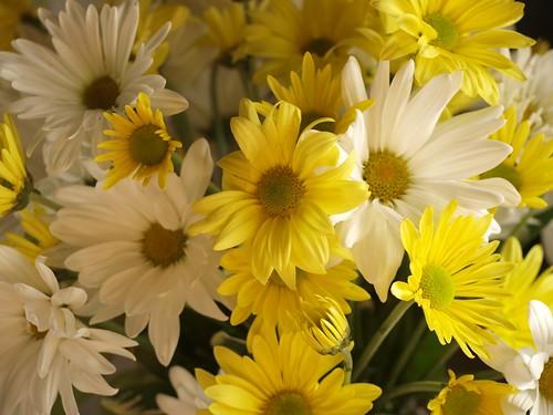 Sunshine & Daisies