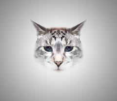 maury (j / f / photos) Tags: deleteme5 deleteme8 deleteme3 deleteme4 deleteme6 deleteme7 cat deleteme10 silo meow maury saveme1 deleteme1 delemete9 deletememe2