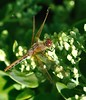 Dragon in his lair (Sheldon Emberly) Tags: pictureperfect englishgardens theenchantedcarousel nikond3000 dragonflyassiniboinepark
