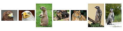 Zoo photos with the Nikon D40 + Nikkor 70-300 VR, by Scott