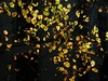 (malidinapoli) Tags: autumn herbst herfst denhaag thehague backagain