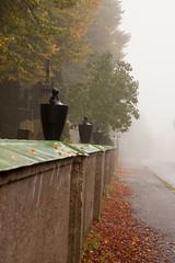 (hildur_bjorg) Tags: street autumn trees fall nature wet cemetery leaves fog sweden earlymorning höst trelleborg dimma hildurbjorg hildurvalgeirsdottir
