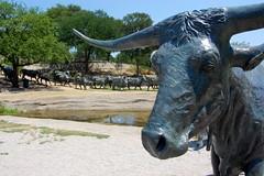 Cattle Drive, Pioneer Plaza, Dallas (3)