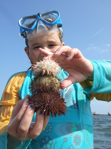 Sea urchin collector Lilly
