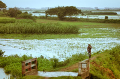 Riding the Rain ([www.farhanahaque.com]) Tags: bridge green water rain landscape village flood path jenny lonely raining bangladesh flooded overbridge lonelyman munshiganj maowa gettyimagesbangladeshq2 farhanahaque gettyimagesbangladeshq3
