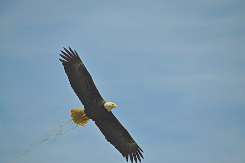 07-04-11 Symbol of Freedom by roswellsgirl