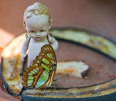 Butterfly series. (Randi Rains Johnson) Tags: stilllife baby cute vintage butterfly fun toy miniature doll child play antique fat small butterflies norman creepy belly german tiny chubby curlyhair porcelain