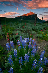 Wildflower Watercolor (Mike Berenson - Colorado Captures) Tags: flowers sunset fence watercolor painting colorado wildflowers lupine allrightsreserved crestedbutte alpenglow gnd washingtongulch topazsimplify coloradocaptures copyright2011bymikeberenson