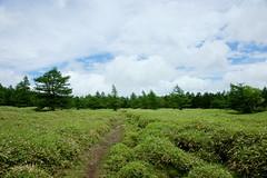 Green field (peaceful-jp-scenery) Tags: green japan landscape highland  nagano  chino tateshina    dslra900 sal2470z variosonnart2470mmf28za  otogiridaira