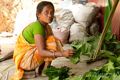 Bundling Together Betel Leaves in Khashia Village - Srimongal, Bangladesh (uncorneredmarket) Tags: people woman bangladesh poeple betel dpn srimongal betelleaf betelleaves ruralbangladesh khashia khashiavillage