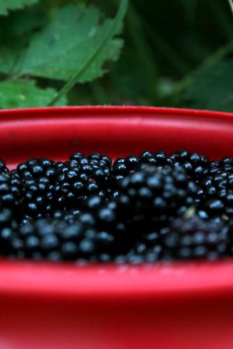 Bucket of Berries 2