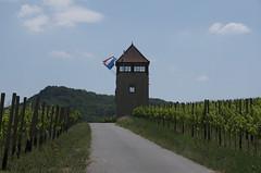 Schengen vineyard walk - 7 (tame_alien) Tags: road building architecture landscape vineyard vines flag luxembourg schengen
