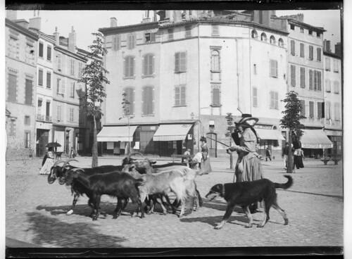 Chèvres et chevrière, place du Salin
