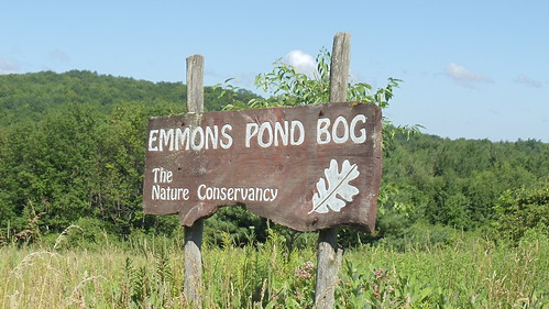 EMMONS POND BOG: The Nature Conservacy by JuneNY