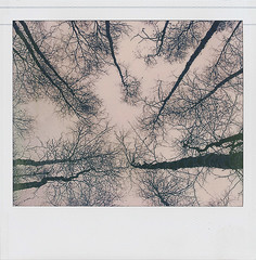 Trees & Sky - Untitled-9_72dpi