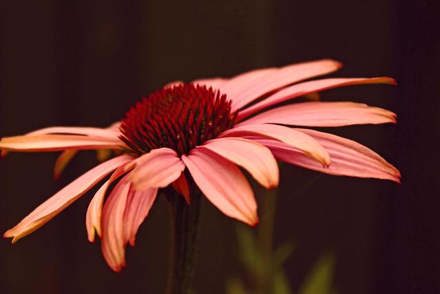 Flower edited