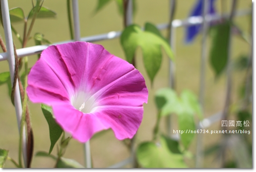20110709_2ndDay Anpanma _1573 f