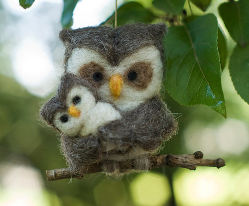 Owl, Family of Two