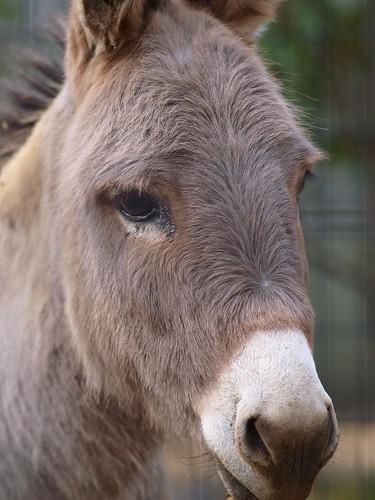 上野動物園 ロバ