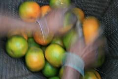 Fresh fruit on the Kameng river Adventure rafting and Kayaking trip