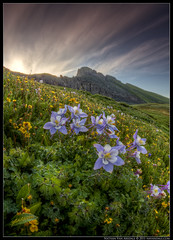 Rise N Shine Columbine (Nathan Van Arsdale) Tags: photoshop sunrise landscape colorado silverton glacier clearlake rockymountains columbine wildflowers wildflower sanjuanmountains ridgeway ouray glaciallake coloradowildflowers photomatixpro canon40d