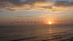 endless: day 45.365 (Samantha's Photography ) Tags: ocean pink sunset sea orange sun beach birds gorgeous gulls flare end setting closure photocontesttnc11